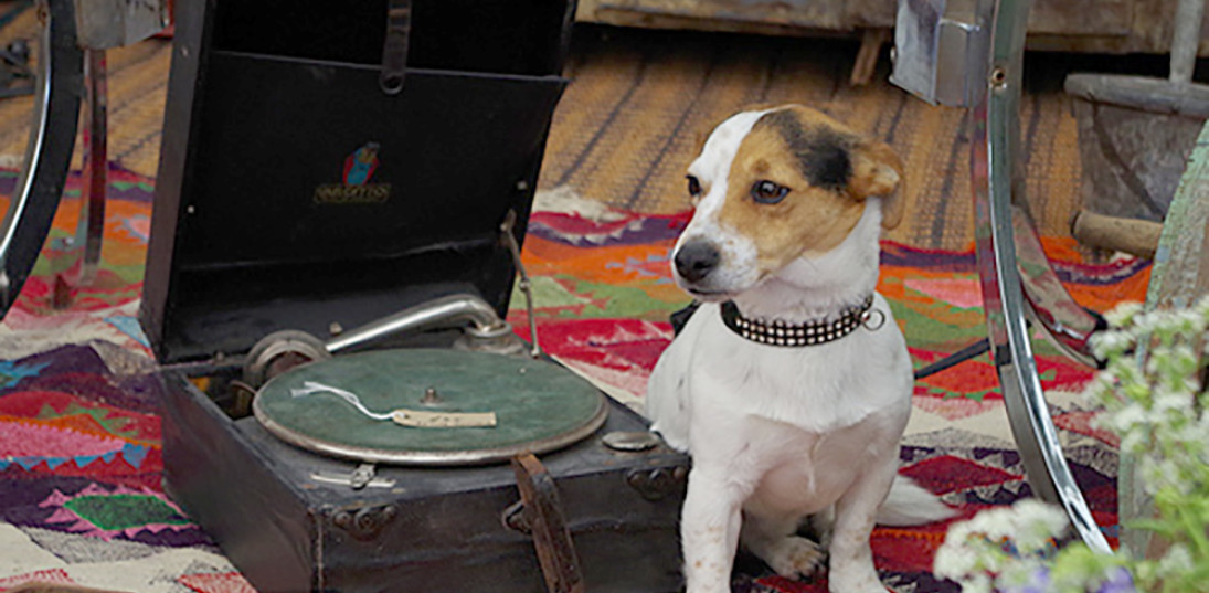 Piggles the dog doing an HMV dog impression at another successful antiques fair.