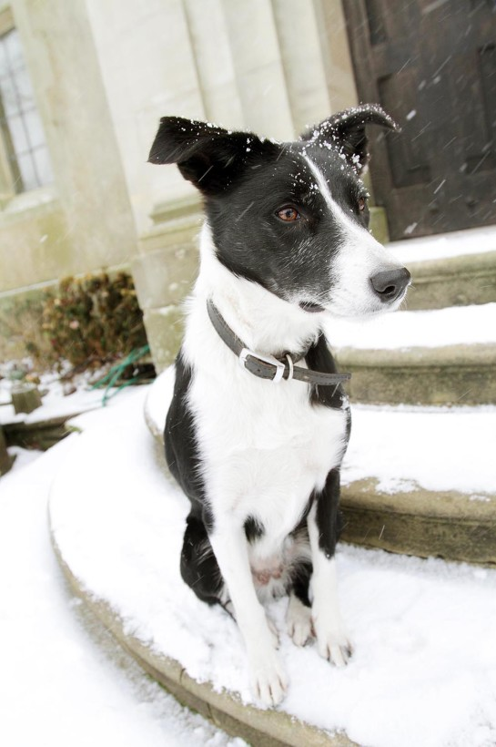 Millie, the family dog at Burton Court in Herefordshire